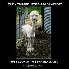This is sure to put a smile on your face 😁 #badhairday