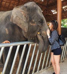 I will miss the elephant cuddles by gabriellemclean Thailand Elephants, Cuddle Buddy, Cuddles, Phuket, Instagram Posts, Animals, Animales, Animaux, Animal