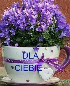 Good Morning, Planter Pots, Happy Birthday, Flowers, Plants, Motto, Humor, Disney, Night