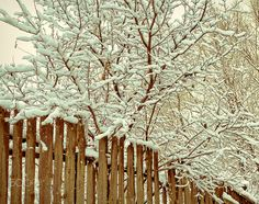 Warm dress. - A tree in snow. Old wooden fence.