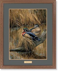 Backwaters--Wood Ducks Art Collection | Wild Wings