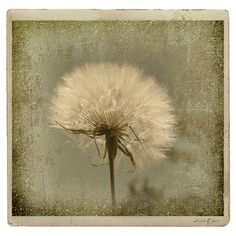 Large Dandelion Rustica is featured on Saatchionline!!
