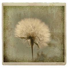 Large Dandelion Rustica is featured on Saatchionline!!