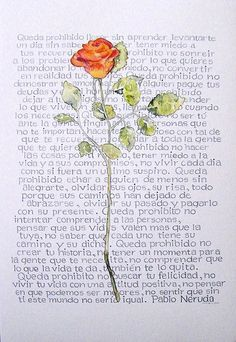 @Arteriole Calligraphy #calligraphy #rose #poem #paolo #neruda #watercolour