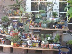 cheap shelves; dear cactus and succulents