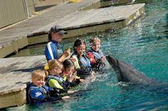 Dolphin Aqua Adventure At Sea World - Child, Gold Coast QLD