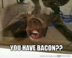 You have bacon?