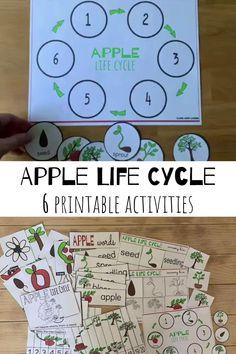 Preschool Apple Theme, Kindergarten Science Activities, Preschool Lesson Plans, Kindergarten Classroom, Science Centers, Kid Science, Sequencing Activities, Math Literacy, Science Education