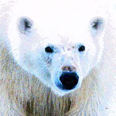 'Polar Bear Flake' von Dirk h. Wendt bei artflakes.com als Poster oder Kunstdruck $18.03
