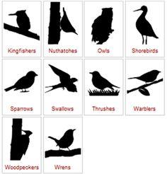 Teaching Bird ID Animal Activities For Kids, Science For Kids, Learning Activities, Teaching Tools, Teaching Kids, Kids Learning, Boy Scouts Merit Badges, Birds For Kids, Bird Theme