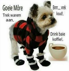 This Photo was uploaded by Afrikaanse Quotes, Goeie More, Good Morning Wishes, Wallpaper Quotes, Qoutes, Humor, Dogs, Animals, Winter