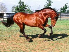 horse - http://www.1pic4u.com/blog/2014/09/19/horse-23/