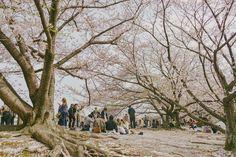 Fukuoka: Ohori-koen - Tricia Will Go Places Cherry Blossom Japan, Cherry Blossom Season, Japan Spring Fashion, Tricia Gosingtian, Filipino Fashion, Jogging Track, Sense Of Place, Travel Outfits, Fukuoka