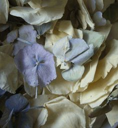 Ivory Rose and Blue and Green Hydrangea Petals Freeze Dried 5 cups (Save 66%)