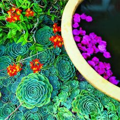small garden tricks- Repeat shapes  Echeverias encircle a water bowl. The rosettes have a crisply defined shape that provides drama and echoes the bowl's circular form. But they're small and monochromatic, which keeps the design simple.