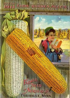 """In the spring of 1911, Farmer Seed & Nursery's catalog pictured white and yellow ears of corner on its colorful front cover. In the background is a little boy with a Mona Lisa smile cradling more corn ears. Did he """"liberate"""" them from the field behind him? Only the artist knows... Farmer Seed & Nursery originated in Faribault, MN in 1888; Andersen Horticultural Library has a collection of their vintage catalogs."""