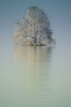 A lonely tree in Lake Geneva, near Montreux, Switzerland via  Harri Jarvelainen