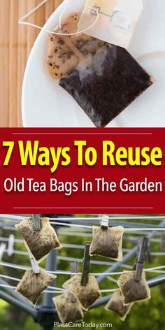Used tea bags have many uses in the garden: use them in compost potted plants lawn repair fertilizer acid loving plants root maggots [LEARN MORE] Garden Compost, Garden Soil, Raised Garden Beds, Raised Beds, Garden Bags, Porch Garden, Garden Plants, Garden Landscaping, Rooftop Garden
