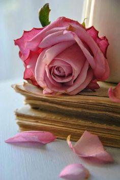 ❤︎ ~ My Love ~ Roses ~ ❤ https://www.pinterest.com/sclarkjordan/~-my-love-~-roses-~/