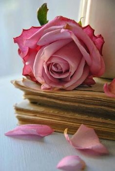 rose. I used to save my roses in books like this when I was younger