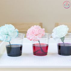 Dying carnations to learn about capillary action.