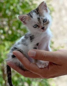 So many cute kittens videos compilation 2019 Kittens And Puppies, Cute Cats And Kittens, Kittens Cutest, I Love Cats, Ragdoll Kittens, Fluffy Kittens, Fluffy Bunny, Pretty Cats, Beautiful Cats