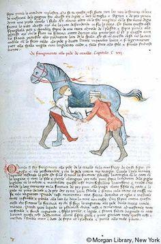 [Livro de la Menscalcia de li cavalli], MS M.735 fol. 98r - The Pierpont Morgan Library