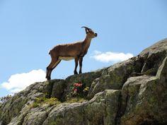 On the Tour de Mont Blanc Fungi Pictures, French Alps, Baboon, Solitude, Tour, Polar Bear, Switzerland, Shark, Wildlife