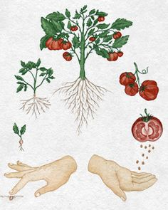 C B A D F B De Ec Plant Parts The Story further Worksheet About Plants For Kindergarten together with Granny Bsmith additionally Carrot besides Quilt. on plant matters seeds fruit trees