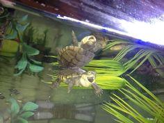 Sie lieben es, Blödsinn zu machen. | 24 Bilder, nach denen Du sofort eine Schildkröte zum Freund willst