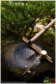 Tsukubai water basin, Daiho-in temple. The sound and tranquility of Bamboo water fountains are inimitable. Zen Garden Design, Japanese Garden Design, Garden Art, Bamboo Garden, Moss Garden, Water Garden, Japanese Water Feature, Bamboo Water Fountain, Stone Basin