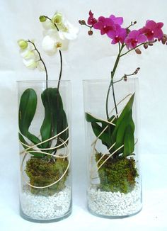 Phalaenopsis Orchidee, Entwurf von Philippe de Stefano - Indoor Vegetal and flower design - Orchideen Orchid Terrarium, Orchid Planters, Succulent Gardening, Planting Succulents, Planting Flowers, Plants In Glass Bowl, Orchid Plant Care, Orchid Flower Arrangements, Growing Orchids