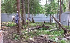Расчистим участок от деревьев и кустарников в короткие сроки!