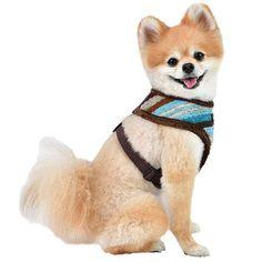 Puppia Crayon Dog Harness A Brown Rust Color, Dog Harness, Your Dog, Corgi, Fox, Stripes, Australia, Brown, Animals