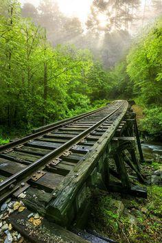 Forest Rail, North Carolinia