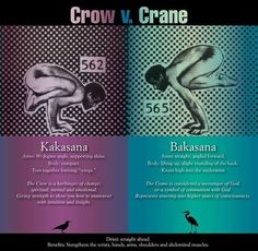 crow (kakasana) vs crane (bakasana)                                                                                                                                                                                 More