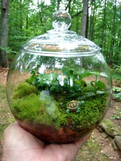 Hydroculture Terrarium Small Covered Vase Moss by MossTerrariums