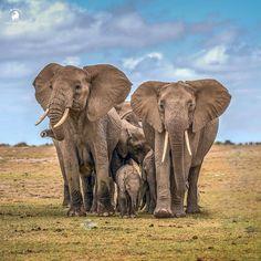 Elephants .