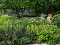 Woodmansterne in July Cottage Garden Design, Love Garden, Garden Pool, Water Garden, Garden Plants, Garden Borders, Garden Structures, Plant Design, Back Gardens