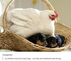 These babies. | 17 Dogs Who Are Very, Very Good Dogs