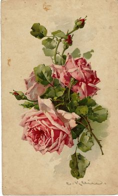 Catharina Klein (1861-1929), painter of roses.