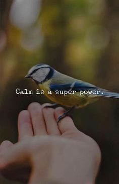 Positive Quotes : Calm is a super power. - Hall Of Quotes Positive Thoughts, Positive Quotes, Motivational Quotes, Positive Vibes, Inspirational Quotes, Favorite Quotes, Best Quotes, Quotes To Live By, Life Quotes
