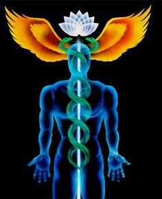"""caduceo de Mercurio - La palabra caduceo es de origen griego y significa """" vara de olivo adornada con guirnaldas"""". Símbolo de la médula espinal, con sus dos serpientes que indican los canales de Idá y Pingalá, por donde ascienden los átomos solares y lunares hasta el cerebro; estos son los sostenidos bemoles de la gran nota """"Fa"""" que resuena en todo lo creado."""