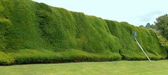 What an enormous hedge! Glad I don't have to trim it!