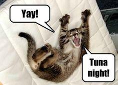 cute kitty says Yay! Tuna night!   #cat #funny #adorable