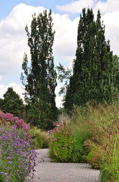 Three Dogs in a Garden: A Garden by Acclaimed Landscape Designer Piet Oudolf