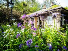 traditional cottage garden