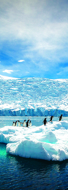 There's never been a better time to sail to Antarctica with Seabourn. Come see where fascinating wildlife meets undeniable beauty. A Seabourn cruise offers an impressive range of options for experiencing Antarctica's bounty of natural attractions. When you cruise with Seabourn, we promise a voyage that is nothing short of magical.