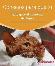 #Consejos para que tu gato goce el momento del baño Que a los gatos no les #gusta el agua no es un secreto. Aunque ellos se #limpian solos con su lengua, también necesitan una higiene #extra a la que nosotros debemos ayudarles.
