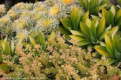 Succulent Gardens Nursery